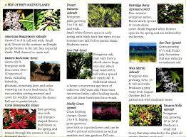 shade native plants cape fear audubon society