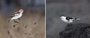 understand the basics of bird molts audubon