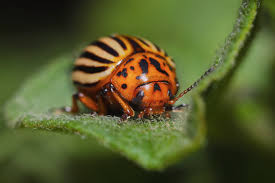 Small Red Bugs On Patio by 22 Ways To Combat Garden Pests Naturally Farmers U0027 Almanac