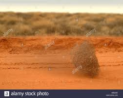 a tumbleweed rolling down a dirt road in the desert stock photo