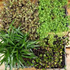 miniature garden plants with mini fern thyme fairy vine