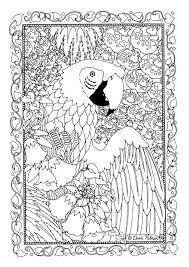 animal coloring pages adults macaw bird coloringstar