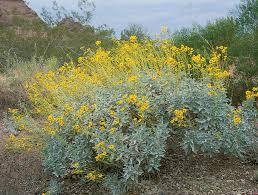 california native plant seeds top 25 native california plants u2013 call realty best palos verdes homes