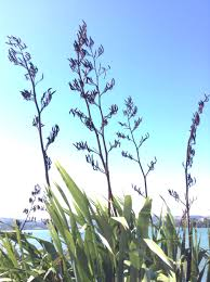 plants native to new zealand porirua harbour strategy working on water u2013 robyn moore u0027s blog