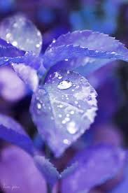 171 best periwinkle lilac lavender images on pinterest