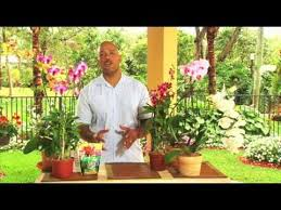 how to care for orchids youtube