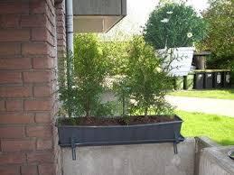 pflanzen als sichtschutz fã r balkon sichtschutz pflanzen immergrun kreative ideen über home design