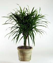 best houseplants that are hard to kill and maintenance tips