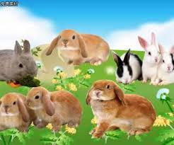 rabbit material rabbit lucinschi graduated memorial psd material background psd