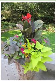 Plant Combination Ideas For Container Gardens - front door pot idea going green pinterest front doors