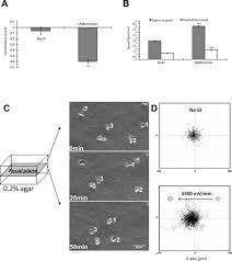 acanthamoeba migration in an electric field iovs arvo journals