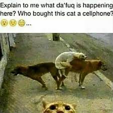 Cellphone Meme - who bought this cat a cellphone imgur