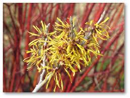 the springfield botanical gardens news february 3 2017