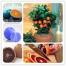 online get cheap orange color pots aliexpress com alibaba group