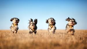 Wallpaper Dogs Download Wallpaper 1920x1080 Dog Run Grass Wind Full Hd 1080p