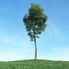 green thin tree 3d cgtrader
