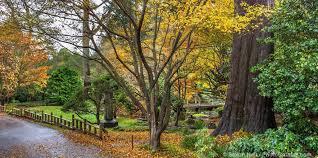 autumn color u2013 san francisco