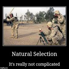 natural selection imgflip