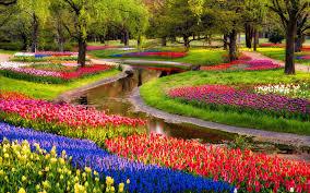beautiful nature flowers garden wallpaper