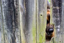 dog fence fighting solutions bring peace to your backyard