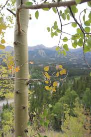 Colorado Fall Colors Map by 29 Best Fall Colors In Breckenridge Images On Pinterest