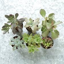 terrarium plant collection succulents terrain