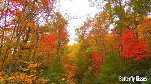 Why Fall Is The Best Season Butterfly Kisses Seven Reasons Why Fall Is The Best Season Ever