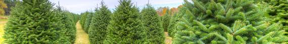 cox christmas tree farm