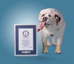 photos mochi the dog with the world u0027s longest tongue wtsp com