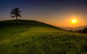 great magic mountain sun tree wallpapers 2560x1600 926557