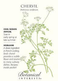 botanical sts chervil seeds 1 gram heirloom by botanical