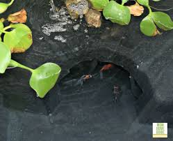 Aquascape Ponds My New Patio Pond And Patio Pond Giveaway