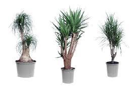 best plant for office https www tntmagazine com media office plants jpg office