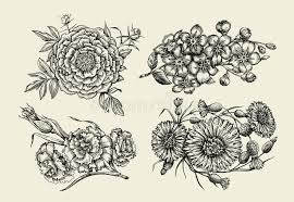 flowers hand drawn sketch flower peony cornflower knapweed