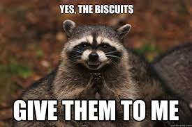 Biscuits Meme - yes the biscuits give them to me evil plotting raccoon quickmeme