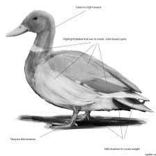 how to draw a duck a practical step by step guide to creating