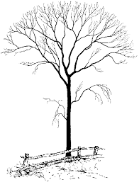 tree graphics free download clip art free clip art on