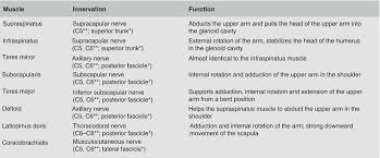 Innervation Of Supraspinatus Rotator Muscles And Subscapular Nerve Injection Anesthesia Key