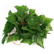 Evergreen Home Decor by Online Get Cheap Evergreen Flowering Vines Aliexpress Com