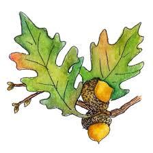 acorn leaves clipart clipartxtras
