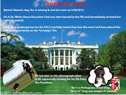Obama Dog Meme - bo obama s dog is missing obama the eater of dogs know your meme