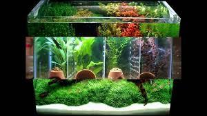 aquarium decoration ideas freshwater ahurissant decor aquarium splendid aquarium decor ideas 2 aquarium