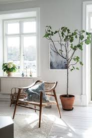 living room interior best 25 big plants ideas on pinterest big indoor plants big