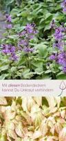 Gartengestaltung Mit Steinen Und Grsern Modern Die Besten 25 Gräser Im Garten Ideen Nur Auf Pinterest Gräser
