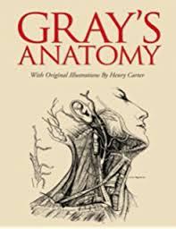 Essentials Of Human Anatomy And Physiology Book Online Grey U0027s Anatomy Book Online At Best Way To Study Anatomy And Physiology