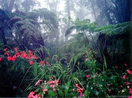 Wyoming vegetaion images Room 42 rainforest vegetation jpg