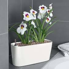 top three self watering plants modern landscaping