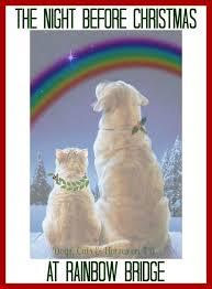 trauersprüche katze 85 besten regenbogenbrücke bilder auf hunde trauer