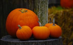 fall pumpkins background pictures harvest tag wallpapers page 2 firefox persona orange harvest