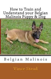 belgian sheepdog for sale uk how to train and understand your belgian malinois puppy u0026 dog
